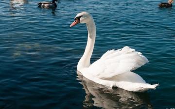 Ausflug Gardasee